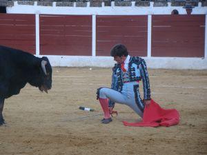 Novillos de la ganadería de Fran Rivera en el festejo taurino de San Mateo 2013